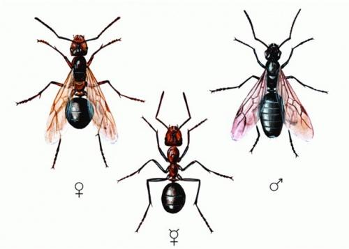 гигантских муравьев и заработал на этом 390 миллионов долларов.