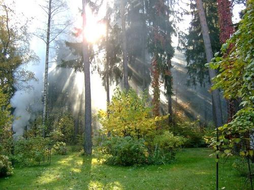 В лесу - интерактивная панорама.  РОССИЯ. природа. прогулка.  Побываем на природе