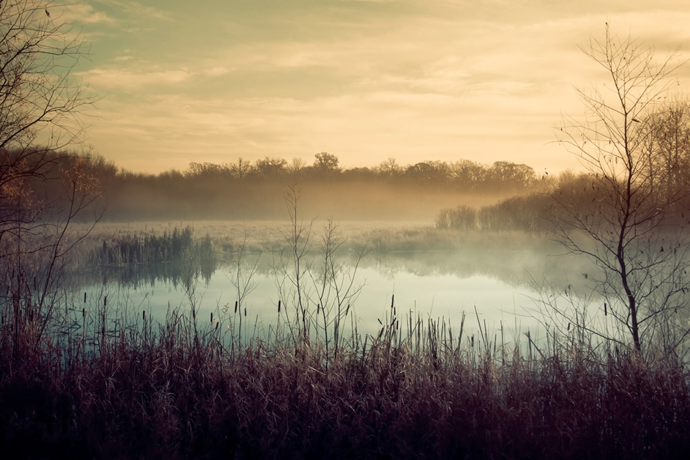 Картинка болото, туман, деревья, трава, вода.  Обои для рабочего стола.