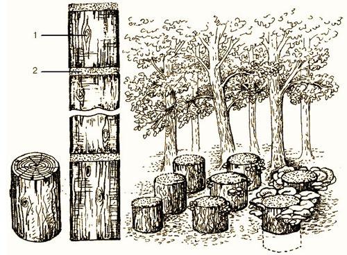 Грибы на садовом участке