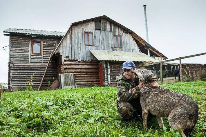 Репортаж: белорус стал вожаком стаи волков и содержит их на своем подворье